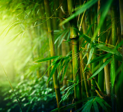About Bamboo Norcross Health Center